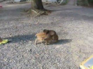 Минипиг и обезьянка)))))
