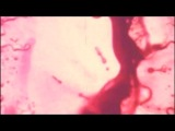 Jefferson Airplane - Its No Secret (HD Video)