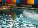 Человек и дельфины)))