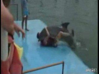 секс с дельфином!)))