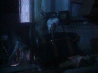 Сериал Маленький бродяга 1 сезон 19 серия 1979