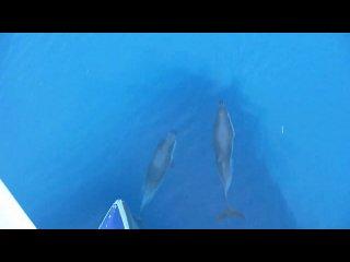 Il balletto dei delfini