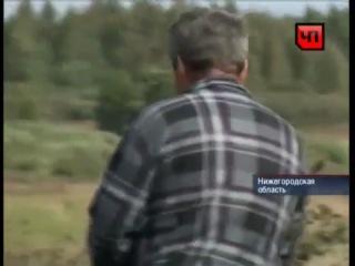 Чупакабра в Нижнегородской области