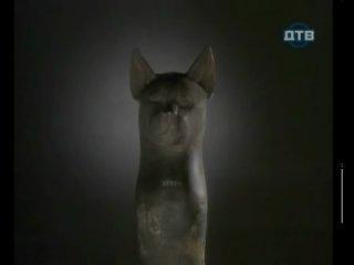 Мистические животные : кошки