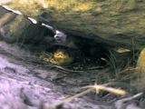 BBC: Плотоядные. Змеи / BBC: Wildlife Special. Serpent