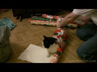 Кот либо дурак, либо пофигист. Подарок
