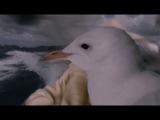Мёртвые до востребования  Pushing Daisies - 1 сезон, 8 серия (2007 - 2009) - сериал