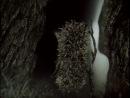 Мультик Ёжик в Тумане на Немецком Языке