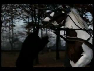 Schwarznegger избил медведя