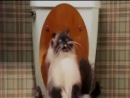 Date Movie Unrated Scene - Jinxers The Pooping Cat Takes A Dump
