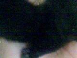 Черный котенок-мана)
