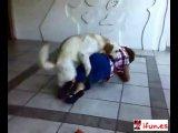 Собака трахает человека О_О
