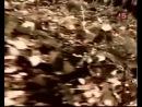 Документальный Фильм Про Группу Спецназа ГРУ В Чечне. Волкодавы (3 Часть)