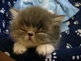 Sweet Tired Cat [-.-]Zzz