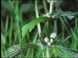 Невидимая жизнь растений / The Private Life of Plants  (1 часть) `1995 [ vk.com/RealScience ]
