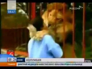 Лев узнал и обнял свою спасительницу спустя годы. / Трогательный случай произошел в Колумбии. Несколько лет назад женщина спасла львенка от неминуемой смерти: вылечила его после страшной аварии, а потом отдала в зоопарк. Через некоторое время она пришла навестить своего питомца./