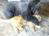 Кот с мишкой
