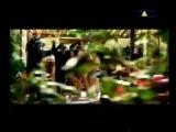 Toy Box-Tarzan & Jane