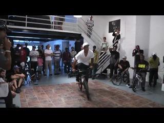 game of bike (animal bikes)