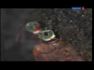 В глубинах мирового океана обитают рыбы-драконы