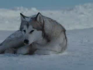 Клип о взаимовыручке нарезка из фильма «Белый плен»на музыку группы Gregorian – Moment Of Peace