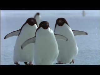 Пингвины Антарктики http://documentalfilms.ucoz.ru/