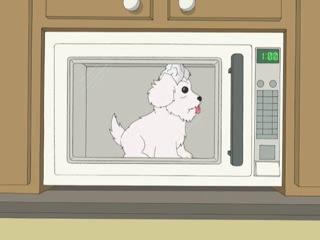 Что будет если накормить собаку шоколадом, одеть на нее фольгу и положить в микроволновку