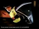 Нападение стаи волков на пост ДПС (трасса М23)-вид из машины
