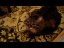 наша говорящая кошка)