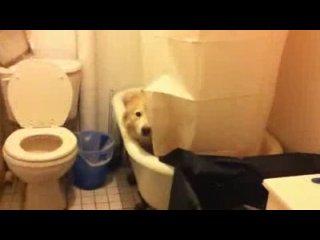 Собака спряталась от испуга