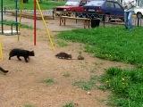 Крыса и коты