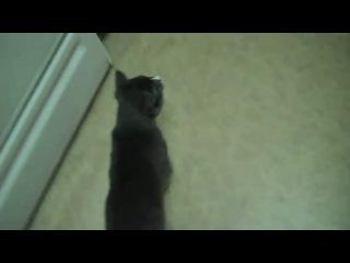 Smart kitten trains human