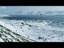Пингвины научились летать