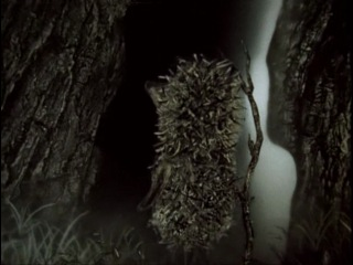 Ёжик в тумане.......мультик про нас:)