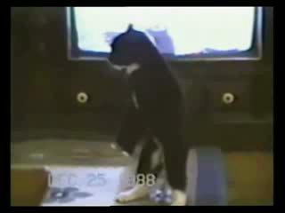 Cмешное видео про животных (до слёз)