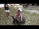 Покатай меня большая черепаха!!!