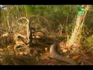 20 самых опасных животных Австралии (2007)