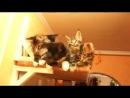 Синхронные котята! =)