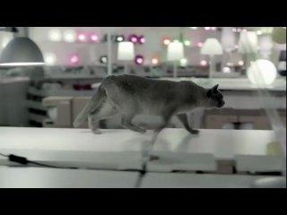 Реклама Икеи с кошками
