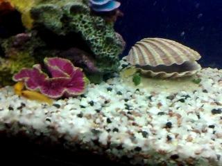Мой аквариум 200 литров (Малавийские цихлиды)