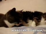как кошки занимаются любовью. Убило.
