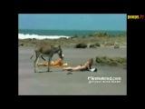 Осёл на пляже!)