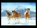 Прикольное видео про животных