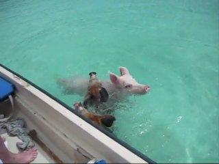 Большая разница: у нас в озёрах и утки, у них в океане и свиньи