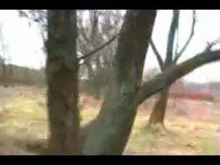 Собака-паркурщик из Украины
