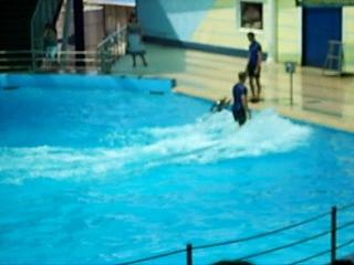 Дельфинарий п. Небуг 2010г.