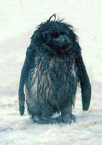 Пингвин Снежков