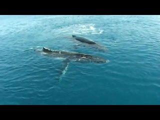 Звуки китов