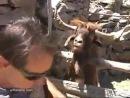 Как надо разговаривать с животными D