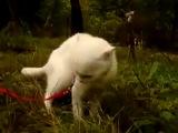 Кот,удивление,шок,паника,няша,ржака,прикол,стеб,няшка,ахаха,ржач,до слез :)